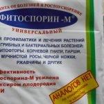 фитоспорин для смородины