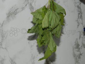 Подсушеные смородиновые листья